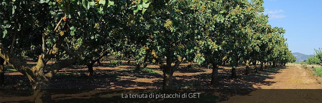 La tenuta di pistacchi di GET