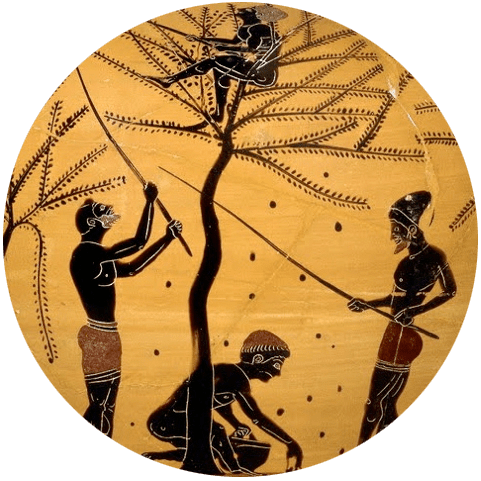 Olive / Sparta