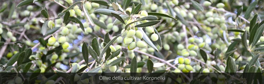 Olive della cultivar Koroneiki