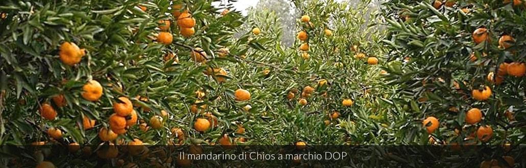 Il mandarino di Chios a marchio DOP